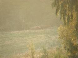 Widok z ambony obwód 157 - po deszczu